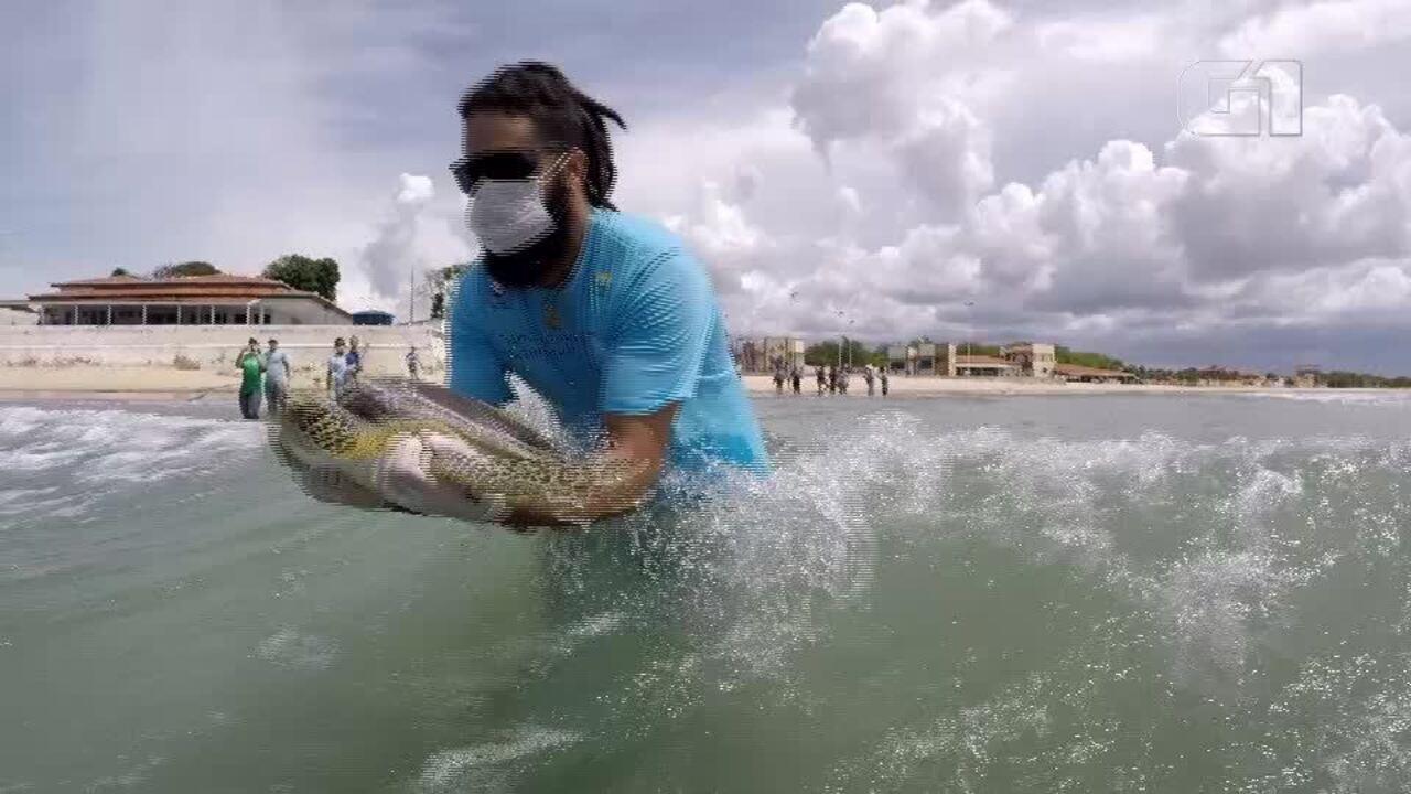 Tartaruga foi devolvida ao mar em Areia Branca, RN