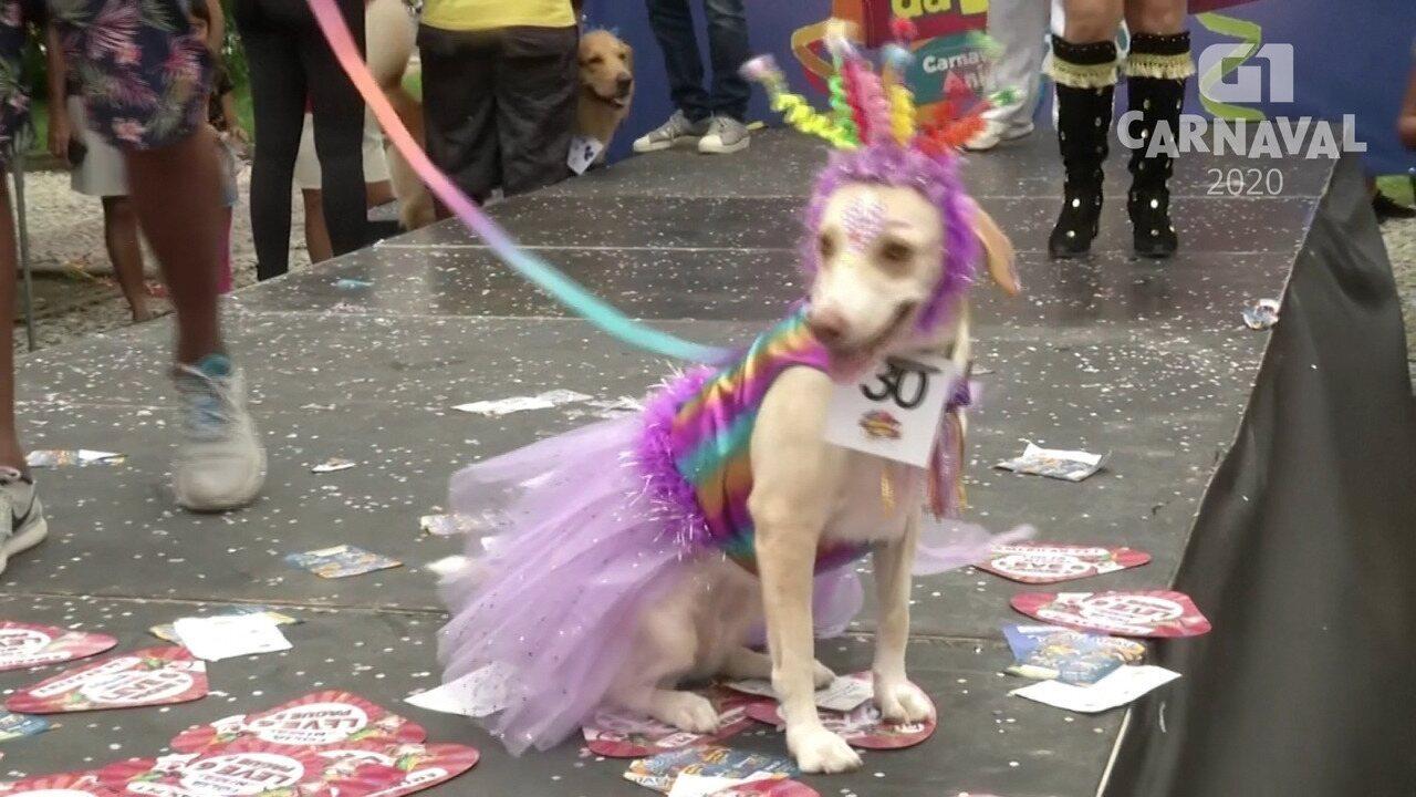 Bloco com cachorros fantasiados é atração no carnaval do Rio de Janeiro