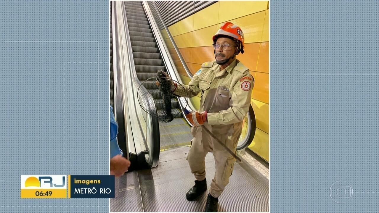 Sagui é resgatado da caixa de som de metrô