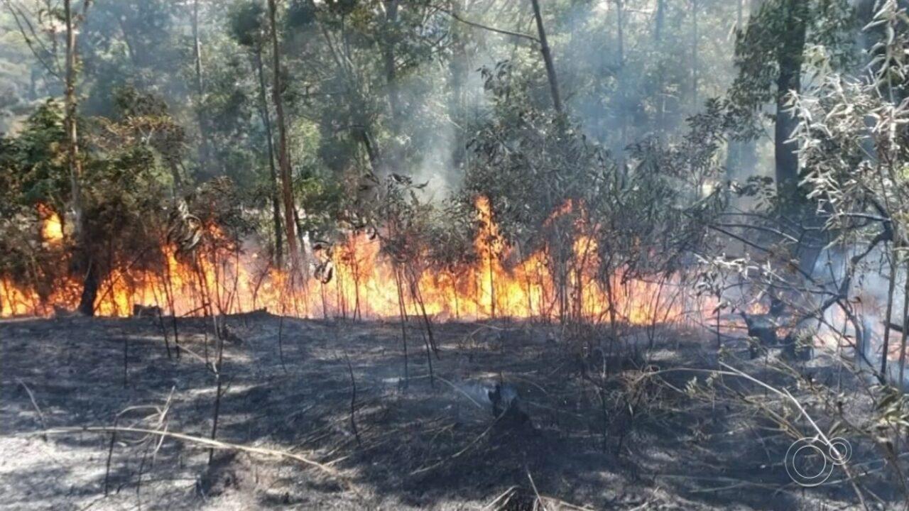 Incêndio de grandes proporções atinge área de mata em Várzea Paulista