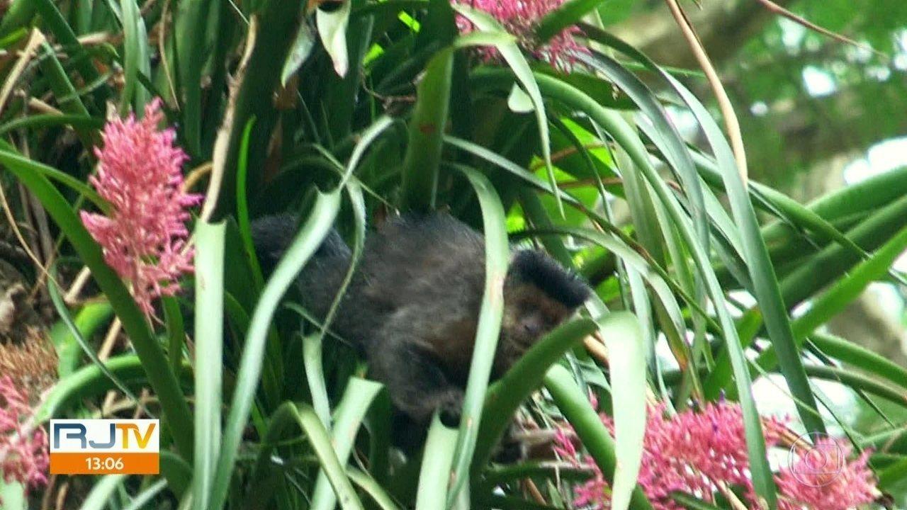 Animais aproveitam a quarentena no Jardim Botânico