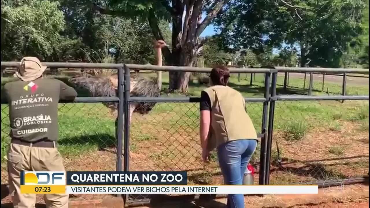 Zoológico faz lives de animais para matar saudade dos visitantes