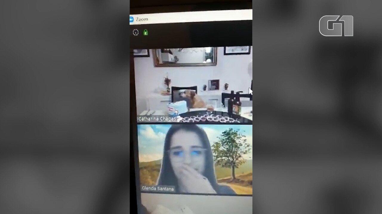 Em videoconferência, cadela derruba bolo de aniversário de dona em São Luís