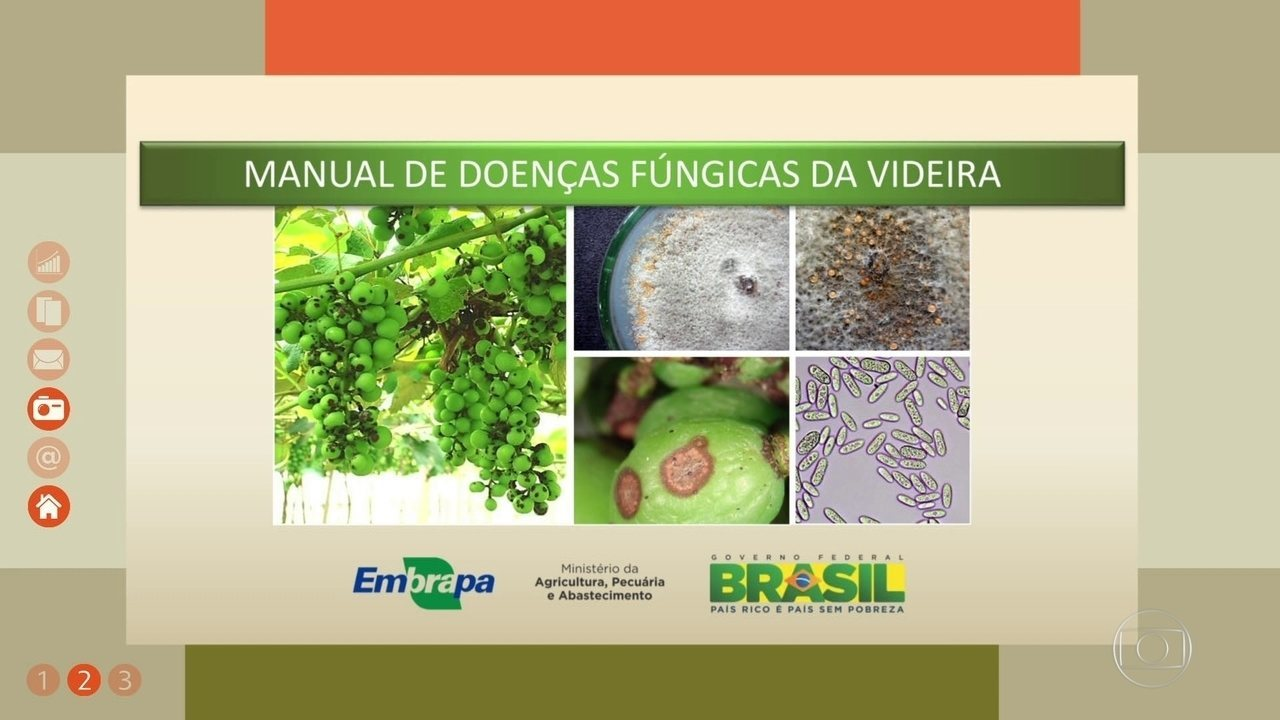 Embrapa Handbook Helps Grape Growers Identify Pests and Diseases