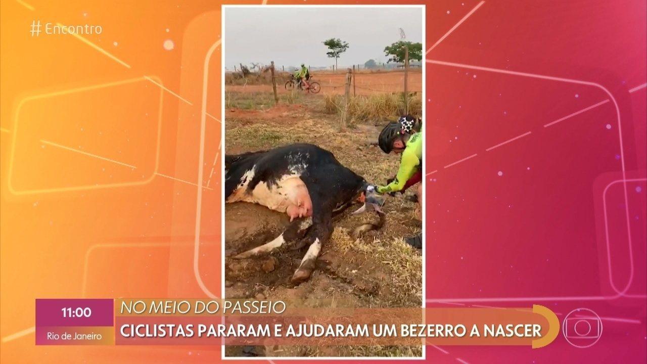 Ciclista interrompe passeio para ajudar parto de vaca