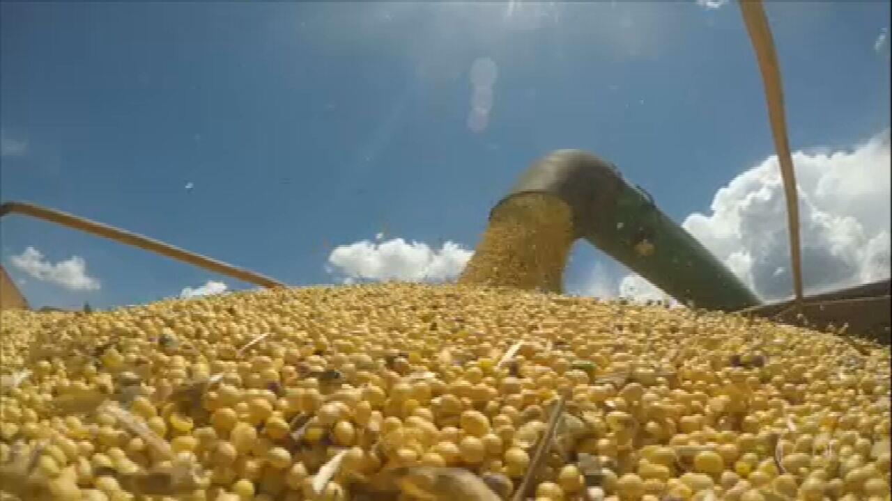 Armazenamento adequado da soja garante boa produtividade