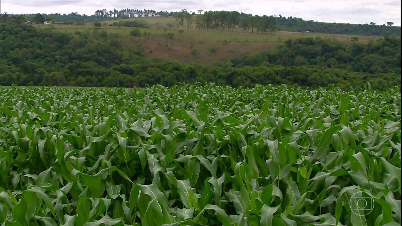 Agricultores de Minas Gerais iniciam o plantio do milho primeira safra