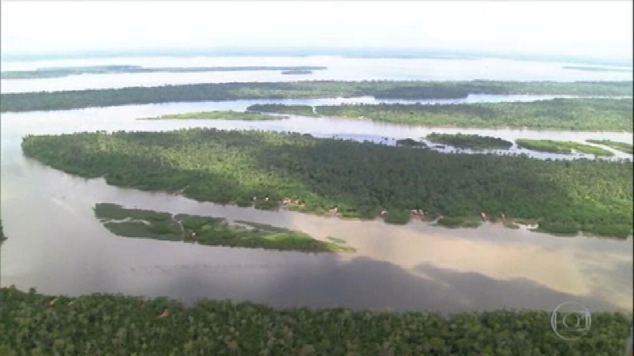 Relembre a pesca do mapará, sustento de famílias das ilhas do baixo Tocantins