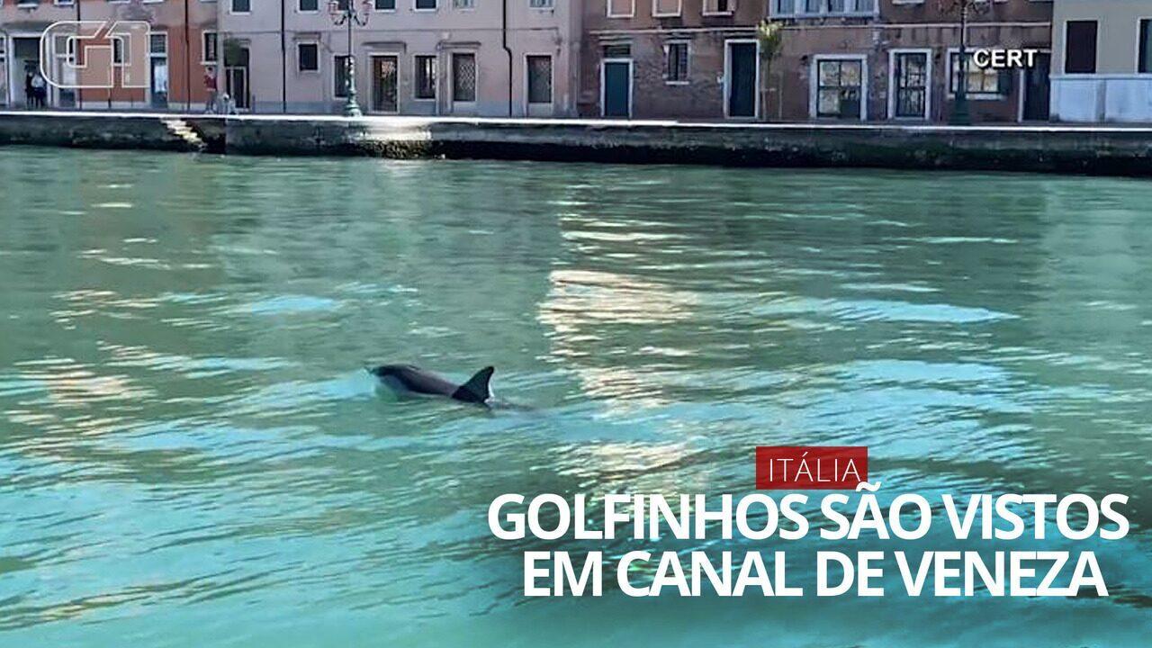 VÍDEO: dois golfinhos são avistados em canal de Veneza