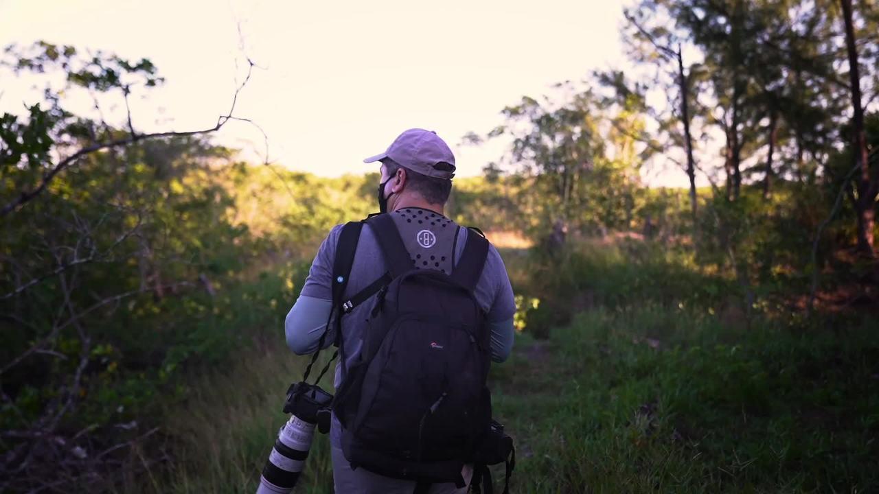 O fotógrafo Gustavo Pedro há mais de 15 anos registra a beleza dos manguezais